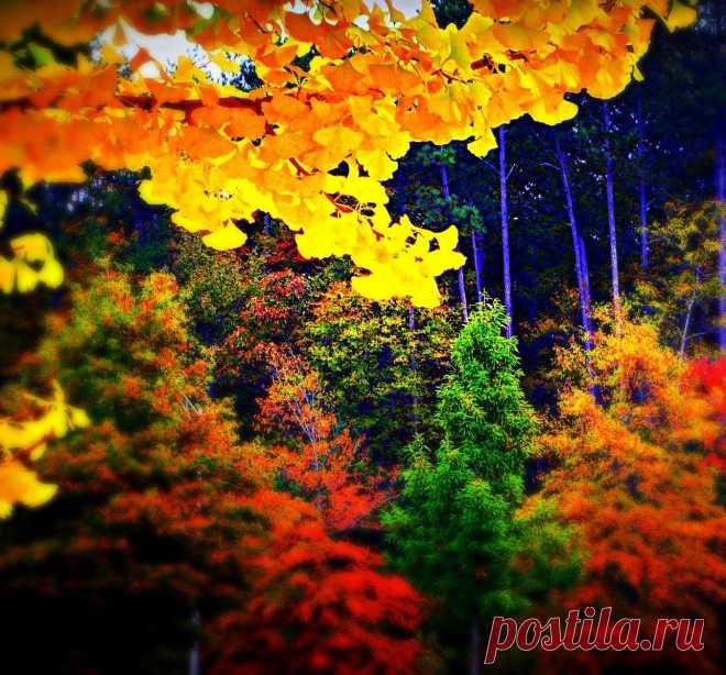 Фото Без названия. Альбом Фото группы - 7156 фото. Фотографии Киномузыкальный проект иНаЧе ✰ Природа, животные, растения и др.