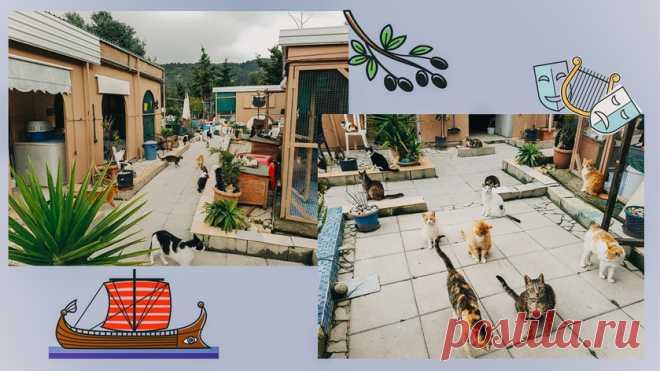 Топ-10 мест в мире, где стоит побывать любителям кошек - Питомцы Mail.ru