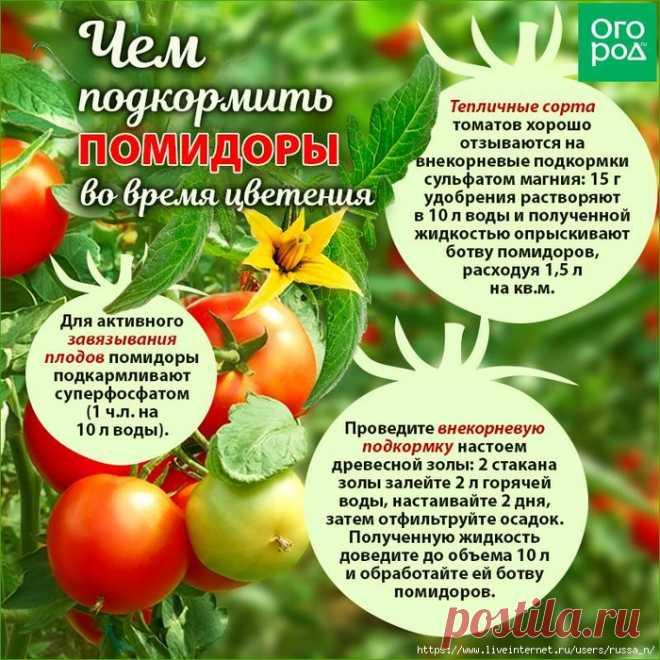 Чем подкормить помидоры во время цветения и плодоношения