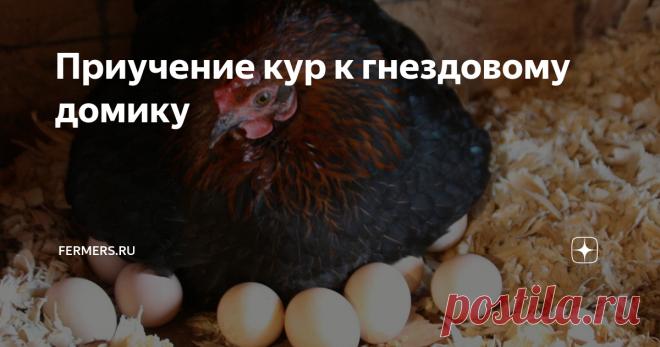 Приучение кур к гнездовому домику У фермеров, занимающихся разведением домашней птицы, может возникнуть следующая проблема – птица не несет яйца в гнезде. К такому поведению приводят некоторые факторы, но также существуют способы исправить ситуацию.