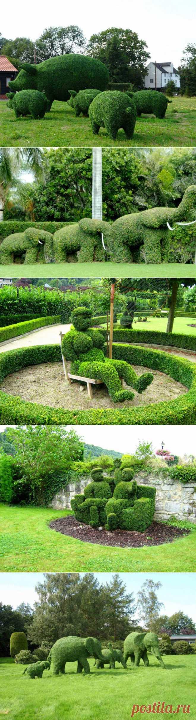» Топиари – зеленое искусство Это интересно!