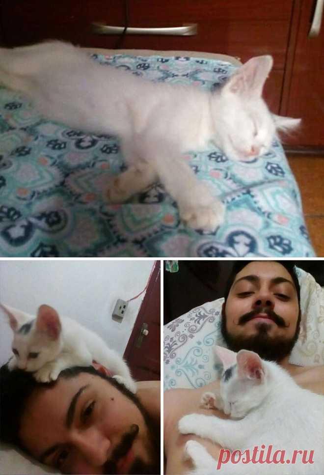 Это не моя кошка!: 40 случаев, когда коты забрели в дом к людям и