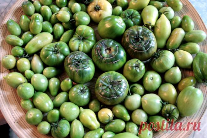 Заготавливаем на зиму вкусные и душистые зеленые помидоры.   DiDinfo   Яндекс Дзен
