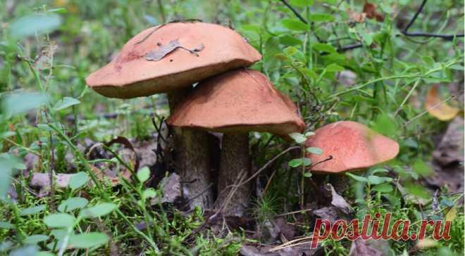 Вред и польза грибов, что нужно знать, чтобы сохранить здоровье в грибной сезон - Образованная Сова