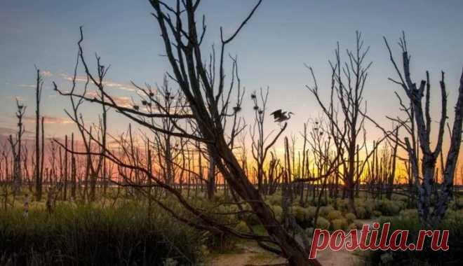 500 видов растений потеряны безвозвратно Человечество стало причиной того, что начиная с середины XVIII века с лица Земли было стерто более 500 видов растений. К такому выводу пришли сотрудники