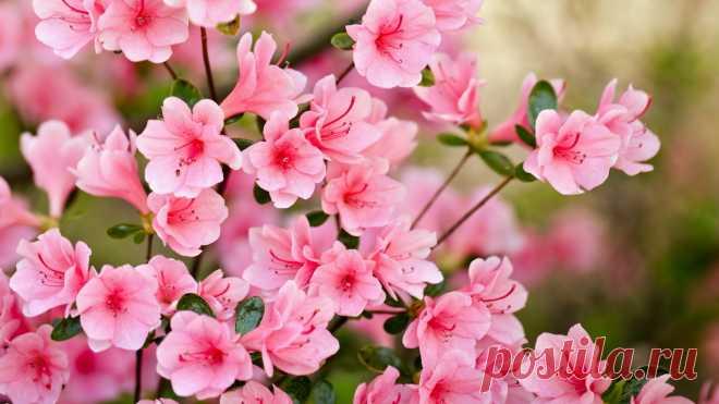 b7ec7b85268 Цветы