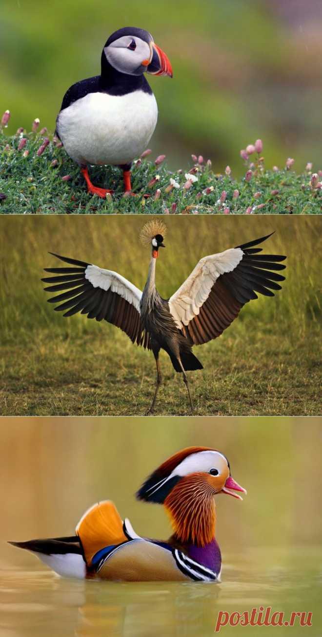 10 самых красивых птиц в мире : НОВОСТИ В ФОТОГРАФИЯХ
