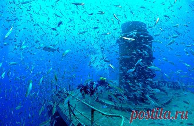 Искусственные рифы | ФОТО НОВОСТИ