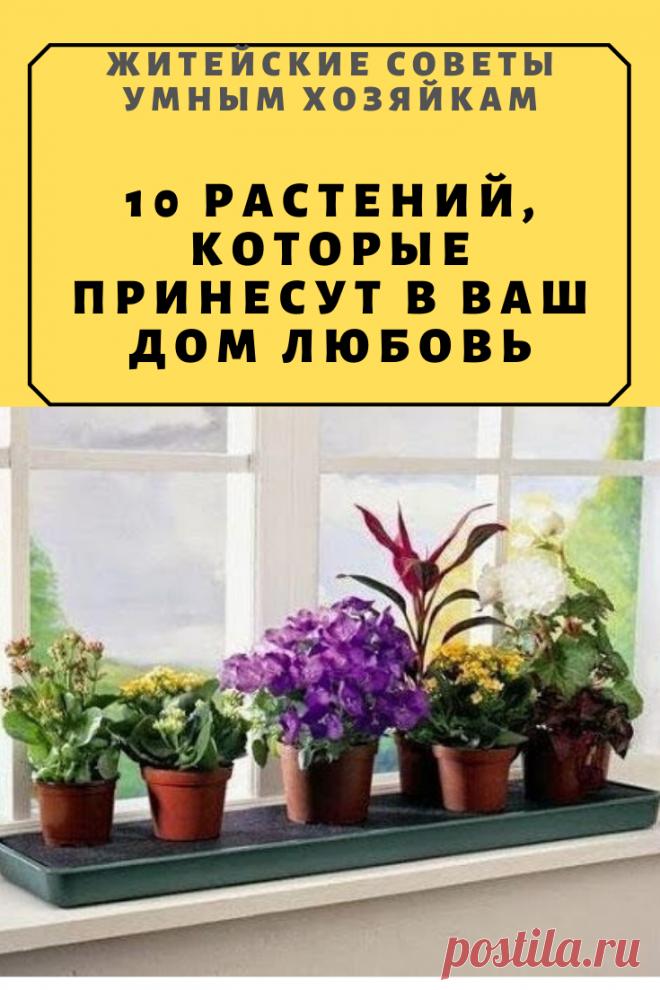 10 растений, которые принесут в Ваш дом любовь | Житейские Советы