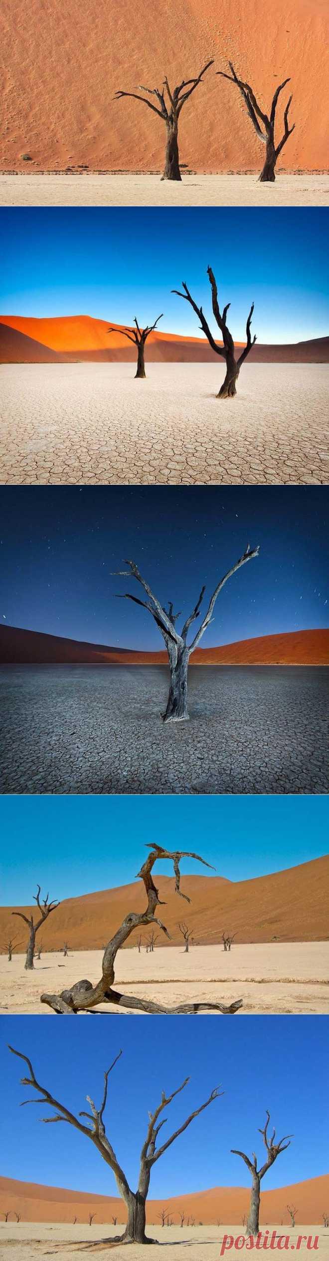 Сюрреалистические пейзажи парка Намиб-Науклуфт :  НОВОСТИ В ФОТОГРАФИЯХ