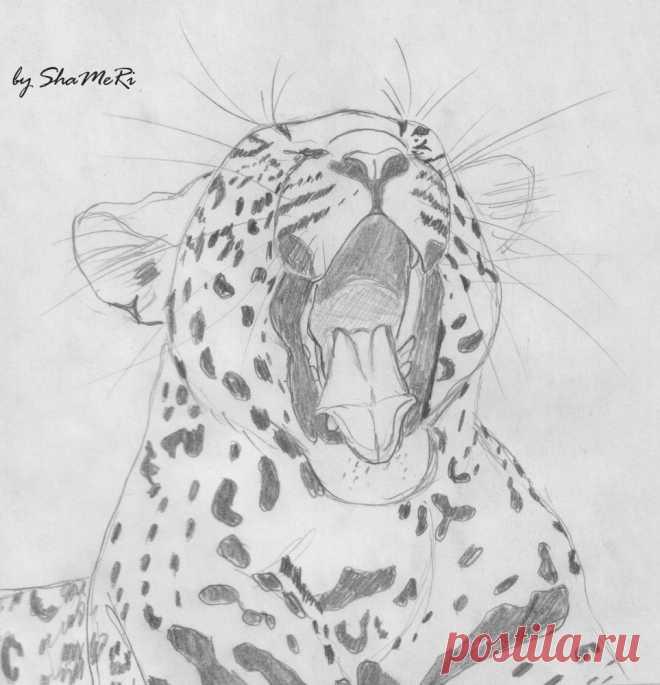 Леопарды рисунки для срисовки