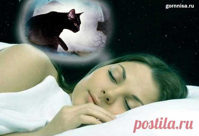 Чёрная кошка во сне - что сон несёт в реальную жизнь   ГОРНИЦА Чёрная кошка во сне - что сон несёт в реальную жизнь. Традиционно считают черную кошку символом угрозы и предвестником неудач. Однако, если