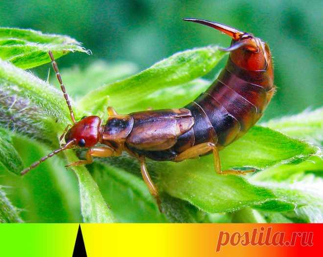 10 насекомых, о которых стоит знать каждому, кто хотя бы изредка выезжает за границу