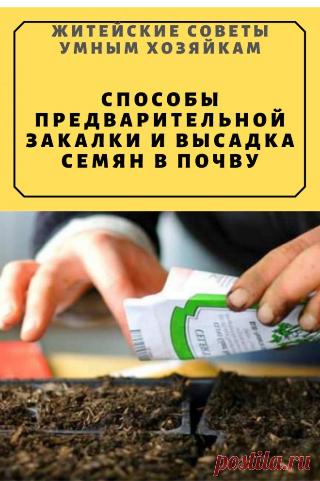 Способы предварительной закалки и высадка семян в почву   Житейские Советы