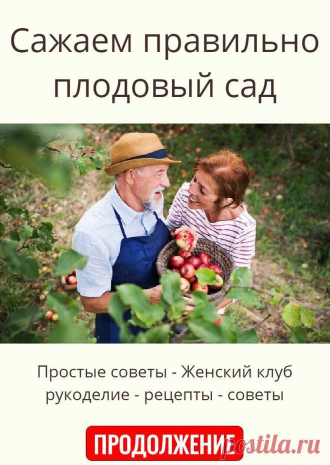 Сажаем правильно плодовый сад