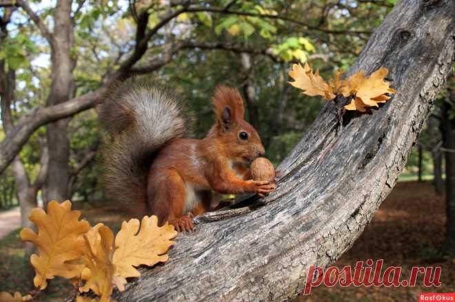 Фото: Солнечный осенний день.. Наташа С. Фото животных - Фотосайт Расфокус.ру