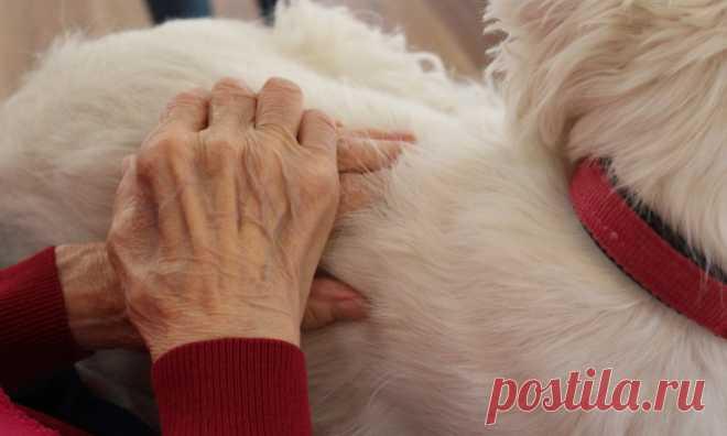 Pétition : Pour que les personnes âgées qui doivent se rendre en maison de retraite puissent emmener avec elles leur animal de compagnie. Animaux - Signez la pétition : Pour que les personnes âgées qui doivent se rendre en maison de retraite puissent emmener avec elles leur animal de compagnie.