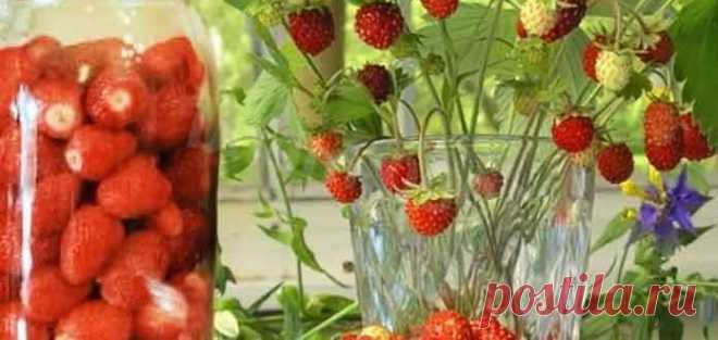 Как сварить компот из земляники на зиму - Готовим рецепты