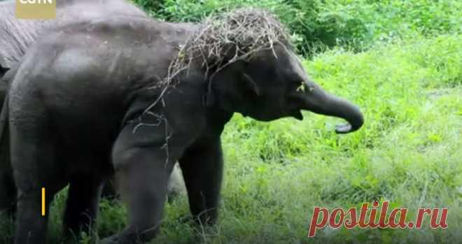 Сегодня Международный день слонов и День рождения у этого слоненка. #Видео