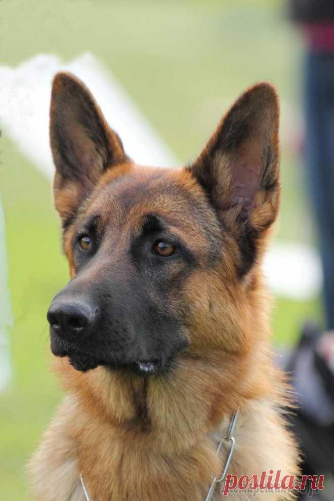 Собачий характер