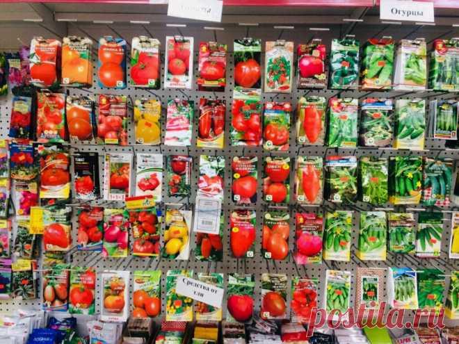 Почему я покупаю семена летом   Садовичок   Яндекс Дзен