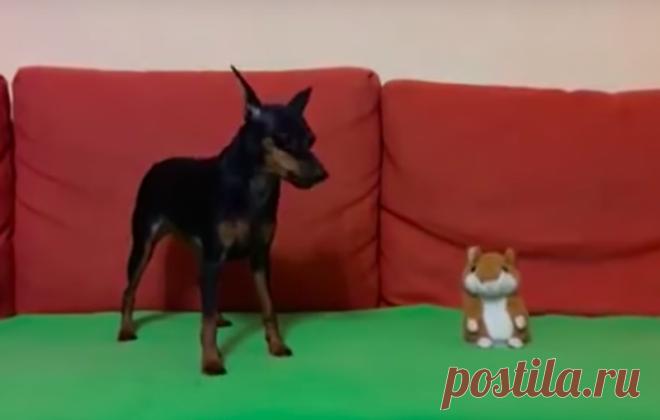 Конфликт собаки и говорящей игрушки. Умора!  PetPop - Ради животных