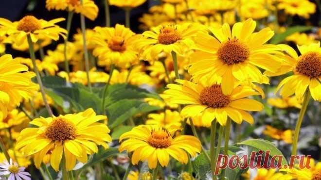 Все о выращивании рассады популярных однолетних цветов   Летники (Огород.ru)