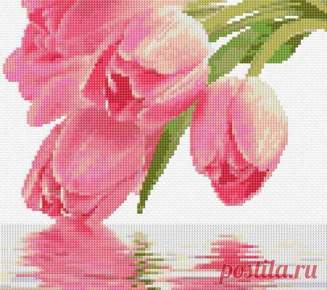 в/к Тюльпаны- 1