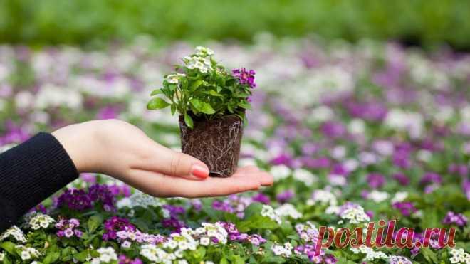 Рассада цветов в домашних условиях: выращивание, уход
