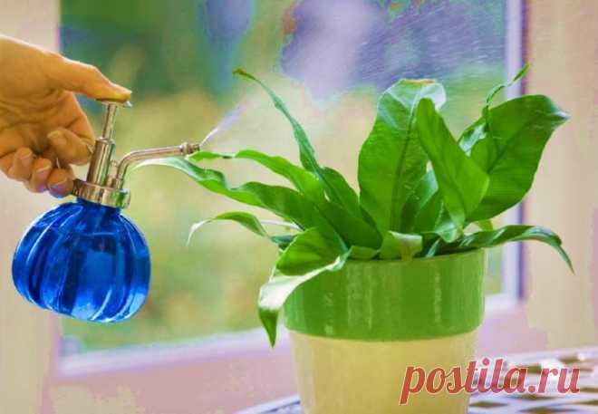 Лучшее удобрение для цветов: простое и эффективное