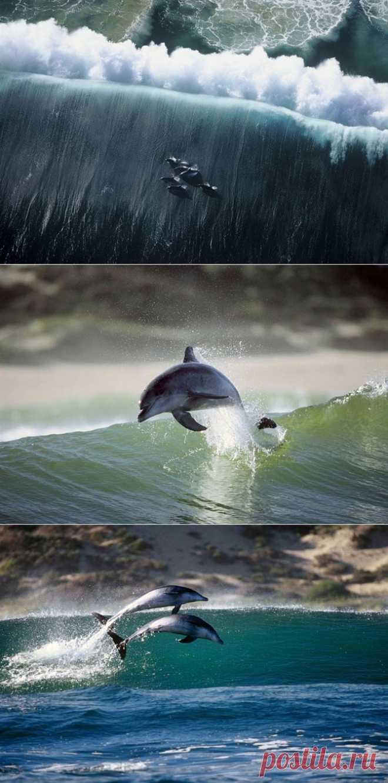 Игры дельфинов | Fresher - Лучшее из Рунета за день