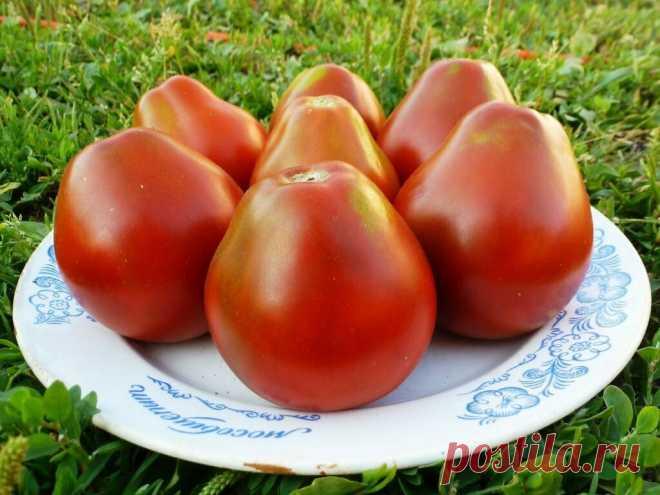 Шестерка самых мясистых, «арбузных» томатов: подбираем сорта на будущий сезон | Наша Дача | Яндекс Дзен