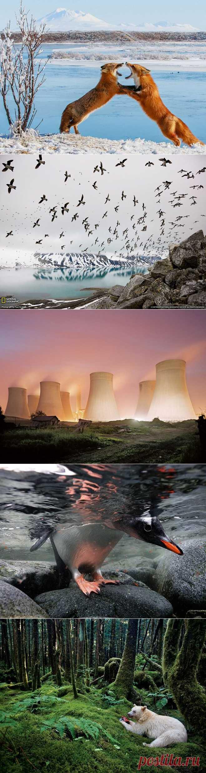 (+1) тема - Лучшие фотографии National Geographic за август 2013   Непутевые заметки