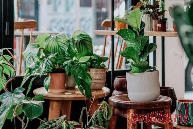 Не дайте растениям погибнуть в жару