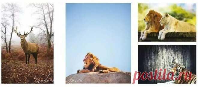 Шкаф купе с фотопечатью тигр на заказ: фото, фотопечать