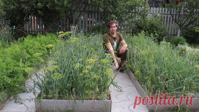 Выбираем дорожки между грядками и высаживаем газон.Видео — Ботаничка.ru