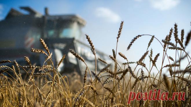 Россия приостанавливает экспорт зерновых за пределы ЕАЭС до 1 июля Россия приостанавливает до 1 июля экспорт пшеницы, меслина, ржи, ячменя и кукурузы в страны, не являющиеся членами Евразийского экономического союза.