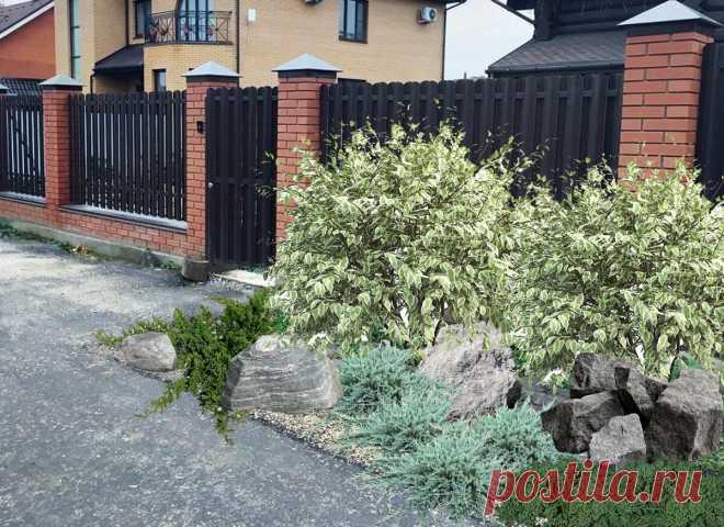 Как украсить вход в дом: 3 схемы клумбы | КЛУМБА | Яндекс Дзен