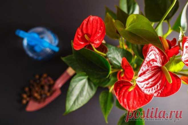 10 комнатных растений, которые очистят воздух в помещении Живые растения и цветы не только красивы, они зачастую дешевле, чем традиционные предметы декора. Это означает, что вы можете обустроить любую комнату за меньшую стоимость, чем, если бы купили новое п...
