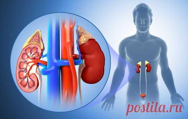 Пиелонефрит: классификация хронической и острой формы болезни