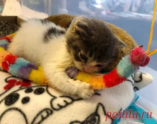 Котёнок с редким недугом находит себе «дедушку» – кота, на которого можно положиться после всего пережитого - Без кота и жизнь не та