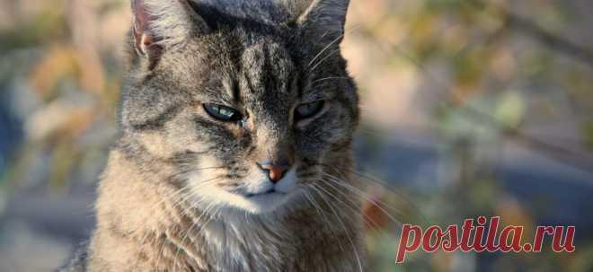 Кошачья месть | PetTips