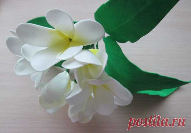 Plumeria from a foamiran: step-by-step MK with a photo | the Master class from a foamiran