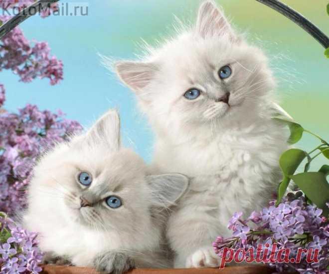 С добрым утром и успешным днём)))