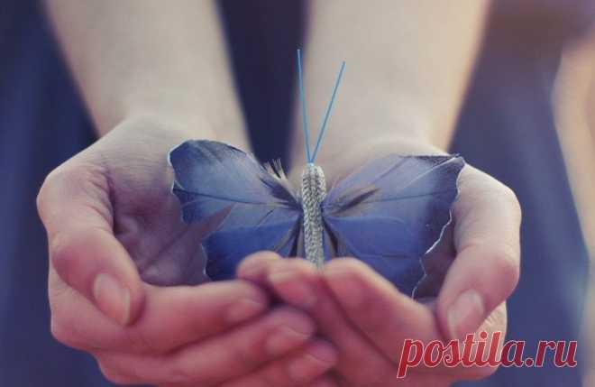 Картинки по запроÑу фото оÑвобождение бабочки