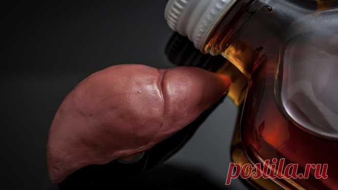 Врачи назвали первые признаки алкогольной жировой болезни печени
