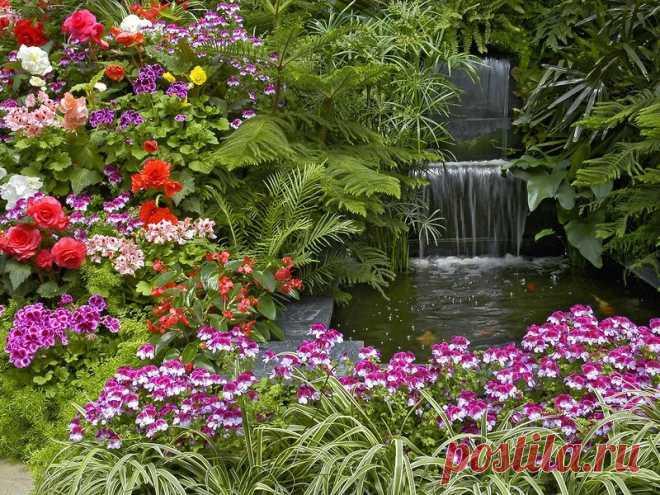 Тропический сад.