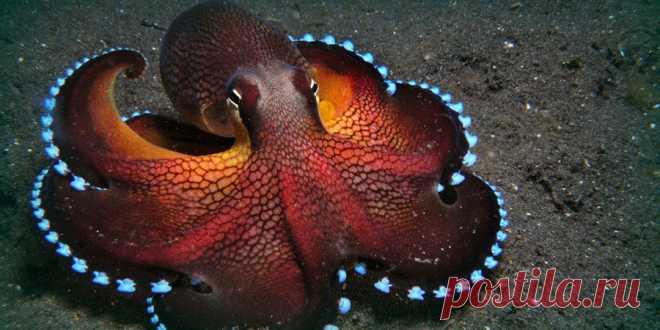 Могут ли осьминоги быть пришельцами Даже внешность осьминога напоминает нам какую-то выдуманную фантастами тварь. Восемь цепких щупалец, уникально устроенные глаза, способность к камуфляжу — и не будем забывать об интеллекте, который вп…