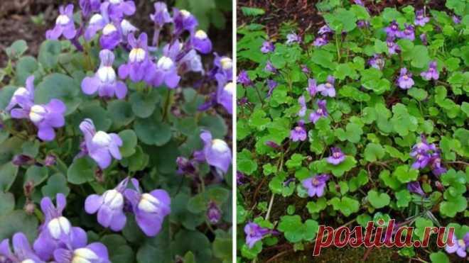 Цветы, которые помогут вытеснить сорняки с участка / Домоседы