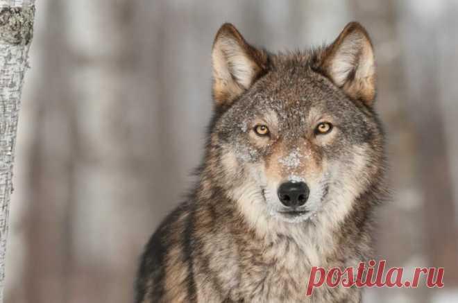 15 животных, которые несут важное послание, когда появляются в нашей жизни   Жизнь под Небесами   Яндекс Дзен
